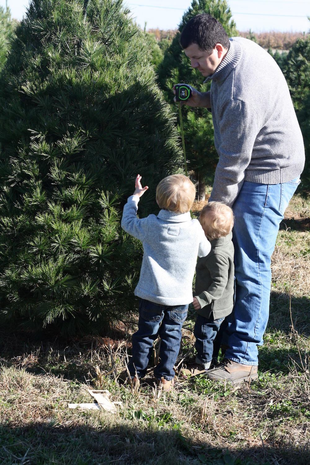 She's a beaut Jude - Cut your own Christmas Trees at Eckert's | Ellie And Addie